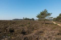Deelerwoud (Leo Kramp) Tags: wwwleokrampfotografienl netherlands landschap plaatsen leokrampfotografie natuurfotografie photography 2019 deelerwoud landscape deelen gelderland nederland
