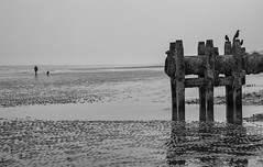 They`er waiting  for you ,,,,,,,, (Through Bri`s Lens) Tags: sussex beach outfall coast lancing brianspicer canon5dmk3 canon1635f4