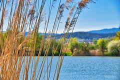 Bürgerpark (r.wacknitz) Tags: wernigerode harz bürgerpark landesgartenschau teich natur nature frühling spring colour dof nikond3400 tamron18200 luminar18