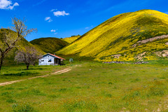 IMG_3670 (jde95tln) Tags: carrizo plain national monument super bloom 2019