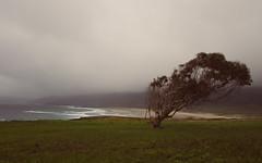 Wind shapes (Alejandro_Martínez_Couto) Tags: ferrolterra galicia olympusem1 paisajes ponzos beach fog grass landscape niebla olympus17mm playa tree verdes árbol