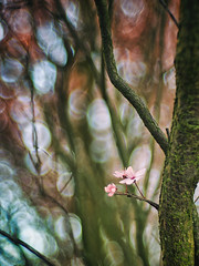 Cherry blossom (Łukasz Rawa) Tags: cherryblossom tree treebranch flower grow bokeh plant fresh growth outside outdoors nopeople nature closeup flora floral detail spring springtime blossom blooming beautiful serene vertical botanical season seasonal gentle colours photography colorimage depthoffield art