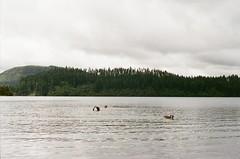 3889-30 (wat_g) Tags: newzealand 135filmcamera travel nature lake duck family