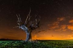 Cosquillas II (Yorch Seif) Tags: noche night nocturna nocturnal lightpainting longexposure largaexposicion estrellas stars d7500 tokina1116