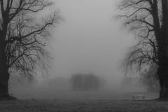 The Quiet Mist (ThePunkyScotsman) Tags: mist park fog trees monochrome moody silent soft