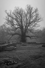 Towards the Onlooker (ThePunkyScotsman) Tags: mist park fog trees monochrome moody silent soft