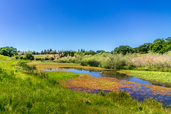 Apr.19_Lazy Float (M Jalone) Tags: water waterscape landscape pond duck waterplants sky tree greengrass