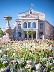 Frühling in der Stadt (Chris Buhr) Tags: münchen munich deutschland germany spring frühling tulpen flowers gärtnerplatz blue sky sonne sun