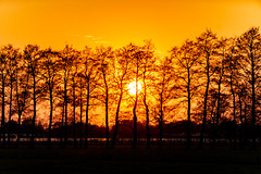 Sunset Orange pt. 2 (Sjaco Manuputty) Tags: sunset sun sunlight sundown trees silhouette silhouettes orange light goldenhour goldenlight yellow colors colorful evening eveninglight eveningsun sky netherlands