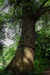 (Giada Cortellini) Tags: tree trees alberi landscape paesaggio canon nature naturephotography