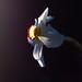 Pheasant's eye narcissus - Narcissus poeticus