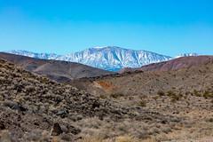 20190318 Death Valley-0198.jpg (Mark Harshbarger Photography) Tags: nationalpark california deathvalleynationalpark burro desert deathvalley places