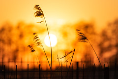 Golden Light (Sjaco Manuputty) Tags: sun sunlight sundown eveningsun eveninglight sky goldenlight goldenhour silhouette backlit colors orange yellow evening netherlands
