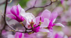 Beautiful Blooms (Brian Snowden Photography) Tags: pentax life pentaxk1ii color flower botany colorful plant oxygen