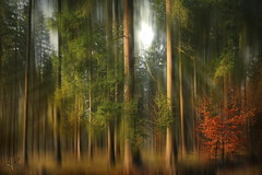 ~~~ mystical forest ~~~ (jmb_germany) Tags:
