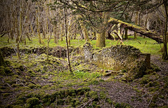 The house in the woods. (Brian Southward) Tags: ruins woods