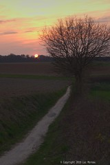 The last one in March (Spotmatix) Tags: 50mm 50mmf14 a68 belgium brabantwallon camera countryside landscape lens minolta places primes sony sunset villerslaville