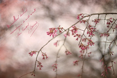 Pink Buds (JMS2) Tags: spring tree blossom pink nature buds flowers texture