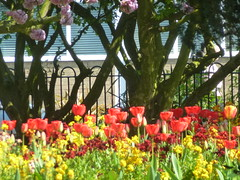 Sunny Spring 2019 (KiranParmar) Tags: sunny spring 2019 leicester april flower