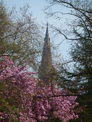 Sunny Spring 2019 (KiranParmar) Tags: sunny spring 2019 leicester april catherdral flower pink