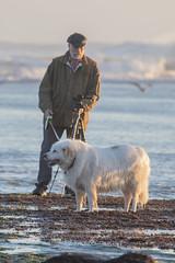 IMG_7838 (armadil) Tags: mavericks beach beaches californiabeaches us onthebeach dog whitedog pyreneesdog