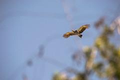 En vuelo (cesarbilan) Tags: cielo alas contrapicado ibera esteros