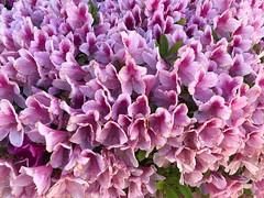 Spring break #marinelapavletich #pavletichmarinela #bakersfield #inspire #beauty #flower #springbreak (maripavletich) Tags: marinelapavletich pavletichmarinela bakersfield inspire beauty flower springbreak