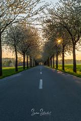Pödinghauser Straße-04-2.jpg (Darklight-Photo) Tags: bäume strase landschaft frühlingserwachen kreisherford sonnenaufgang frühling enger allee blüten owl