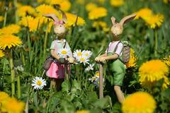 Joyeuses Pâques (Croc'odile67) Tags: nikon d3300 sigma contemporary 18200dcoshsmc paysage landscape fleurs flowers printemps spring fruhling
