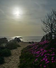 Pomeriggio sulla spiaggia di Sabaudia (giorgiorodano46) Tags: aprile2019 april 2019 giorgiorodano italy sabaudia lazio circeo parconazionaledelcirceo torrepaola