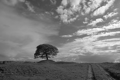 Ridge (Tony Tooth) Tags: nikon d600 tamron 2470mm tree lonetree track sky ridge butterton staffs staffordshire bw blackandwhite monochrome england