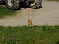 Benji also...... (elisabeth.mcghee) Tags: katze kater cat male rot red getigert haustier tier animal unterbibrach oberpfalz upperpalatinate