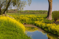Beautiful yellow flowers in the landscape (jan.vd.wolf) Tags: tricht gelderland nederland