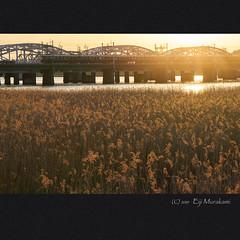 淀川 (Eiji Murakami) Tags: japan osaka spring sony α7r2 a7r2 alpha7r2 sigma mc11 日本 大阪 春 淀川