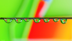 SEVEN - 6704 (ΨᗩSᗰIᘉᗴ HᗴᘉS +56 000 000 thx) Tags: 7 seven sept friday flickrfriday flickerfriday drop droplet water needle belgium europa aaa namuroise look photo friends be yasminehens interest eu fr party greatphotographers lanamuroise flickering