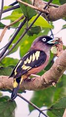 bird (sandilesmana28) Tags: sony a9 gm 400 28