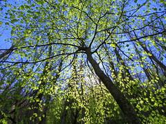 IMG_0112x (gzammarchi) Tags: italia paesaggio campagna natura montagna palazzuolosulseniofi lafaggiola valicodelparetaio albero ombrello riflesso