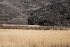 20190416a73_7328 (Gansan00) Tags: ilce7m3 α7ⅲ sony japan 大分 oita 日本 九重連峰 登山 landscape snaps ブラリ旅 04月 fe24105f4 trekking travelphotography