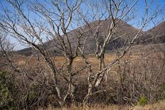20190416a73_7302 (Gansan00) Tags: ilce7m3 α7ⅲ sony japan 大分 oita 日本 九重連峰 登山 landscape snaps ブラリ旅 04月 fe24105f4 trekking travelphotography