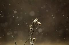 Snowy bokeh! (michaelstafford5) Tags: snow bokeh bokehbubbles winter landscape moody pennsylvania pasgl pa wexfordpa pentaxian pentax pentaxart tamronadaptall tamronsp30028 tamron60b k5iis