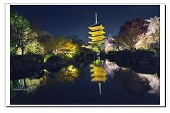 _DSC1432-1 (ychlin2005) Tags: 日本 日本國 夜櫻 東寺 櫻花