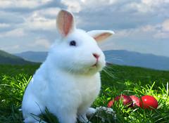 Frohe Ostern (Mariandl48) Tags: osterhase hase ostern eier bunteeier froheostern