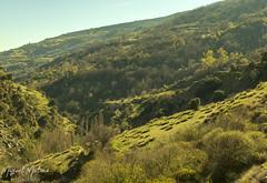 BARRANCO POQUEIRA (Asomados al Mundo) Tags: capileira alpujarra alpujarras poqueira montaña