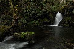 Cascada (Jose Cantorna) Tags: nikon d810 agua cascada paisaje landscape río naturaleza outside nature verde green helechos