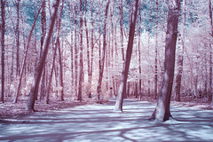 IR Woods (gambajo) Tags: woods forest park trees nature infrared infrated infrarot landscape natur bäume surreal