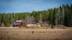 Farm (Mikael Neiberg) Tags: finland farm finnishfarm countryside finnishcountryside agriculture espoo nikond700 nikkoraf75300mmf4556 spring horse horses pirttimäki pirttimäenulkoilualue telephoto