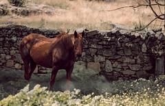 fatty horse (jcc90) Tags: nikon d3200 animals horse nature farm beginner tamrom