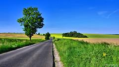 Almost Tuscany (Szymon Karkowski) Tags: outdoor road field fields grass tree trees hill hills blue sky green yellow landscape nature natural explore agriculture opole voivodeship czerwonków poland nikon d7100