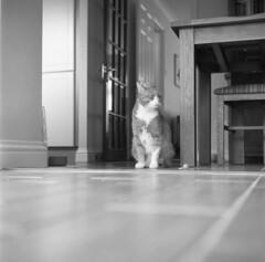 Sir Charles. Film 114001 (richardhunter3) Tags: yashica 635 tlr ilford delta 3200 cat indoor film 120 medium format vintage