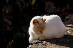 Baño de sol (SantiMB.Photos) Tags: 2blog 2tumblr 2ig castellfollitdelaroca garrotxa girona invierno winter gato cat sol sunlight geo:lat=4221843181 geo:lon=255424197 geotagged cataluna españa